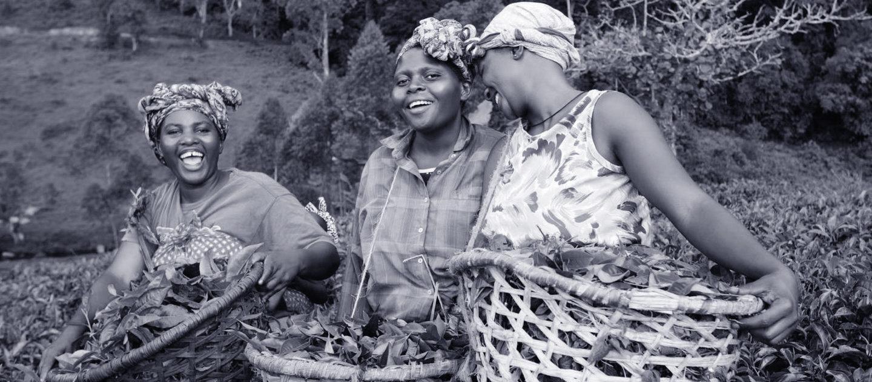 Tea Farmers in Uganda